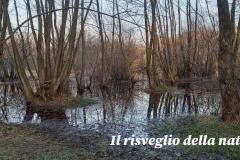 risveglio-natura-1
