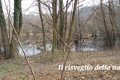 risveglio-natura-2