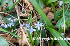 risveglio-natura-6