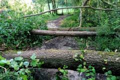 strage-alberi1
