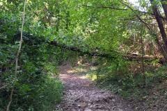 strage-alberi2
