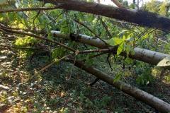 strage-alberi3