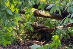 strage-alberi5