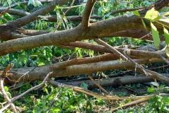 strage-alberi6