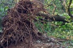strage-alberi7