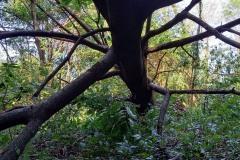 strage-alberi8